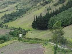 Ladera con pinos