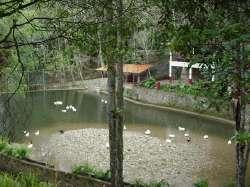 Laguna con Patos