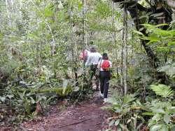 Caminata por la selva hasta el pie del Salto Ángel