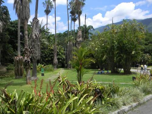 Jard n bot nico de caracas venezuela tuya for Jardin botanico de granada