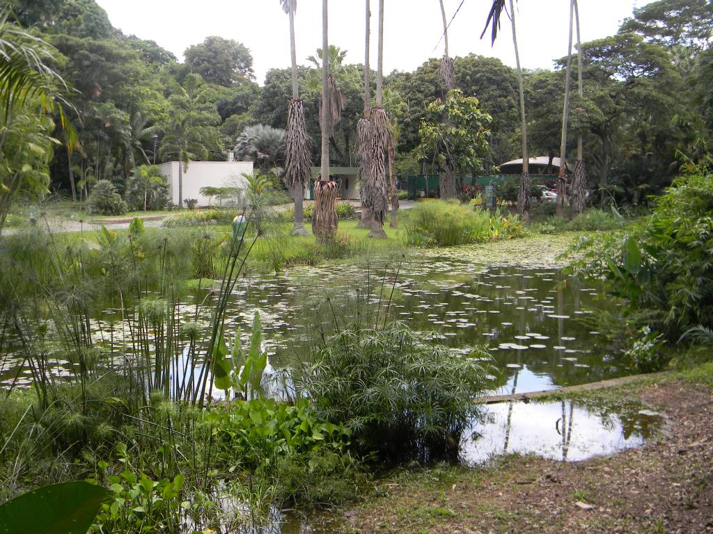 Jard n bot nico de caracas venezuela tuya for Centro de eventos jardin botanico