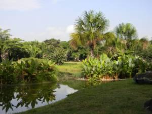 Vista del Jardín hidrofítico