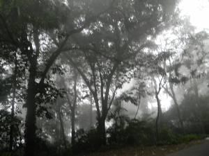 Neblina en la vía a Ocumare