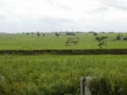 Llanos de Barinas