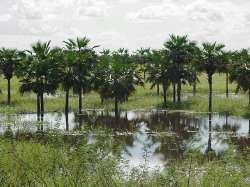 Esteros de Camaguán inundados en Invierno