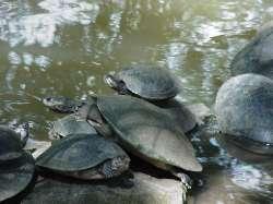 Tortugas en el Parque Loefling