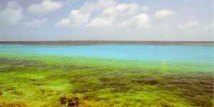 Playa con corales en los roques