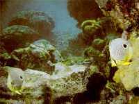 Corales en los roques