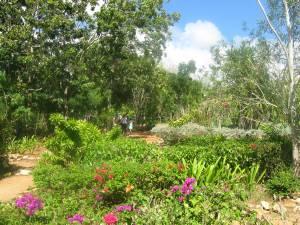 El jardin del laberinto