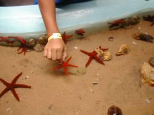 Contacto con estrella de mar