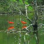 Aves en Morrocoy