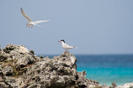 Aves de la isla La Tortuga