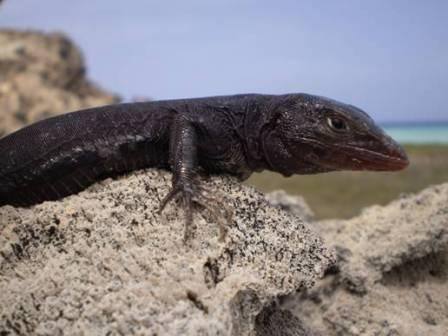 Reptiles Umbral de la Historia - Venezuela Tuya
