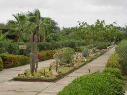 Jardín xerófito de Coro
