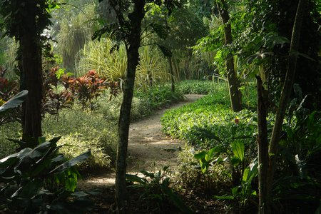 Parque de la Flora Exótica Tropical