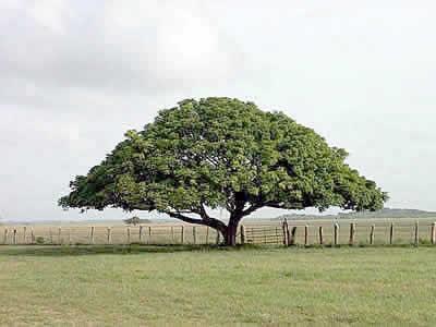 arbol genealogico gratis
