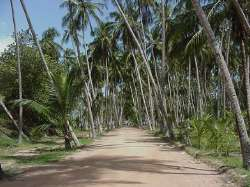Camino de llegada a la playa Medina