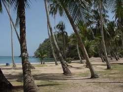 Playa Cocoteros