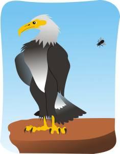 águila no caza mosca