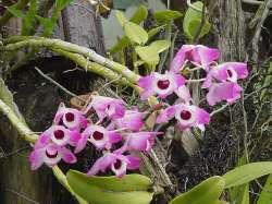Flores en Carrizales