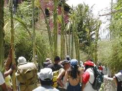 La llegada de los palmeros a la ciudad