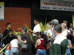 Repartición de palmas en Chacao
